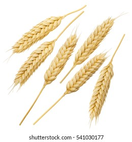 Wheat ears collection set isolated on white background 8 as flour and pasta package design element