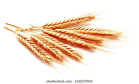 Wheat ears corn isolated on a white background close up