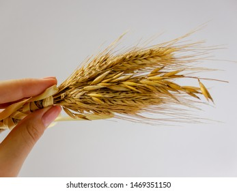 wheat ears in female hand with yellow band