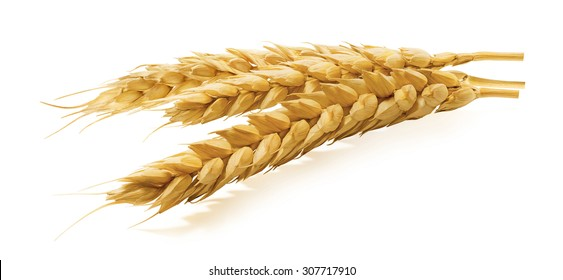 Wheat ears horizontal isolated on white background as package design element