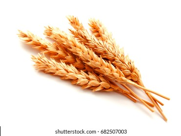 Wheat ears isolated on a white background close up