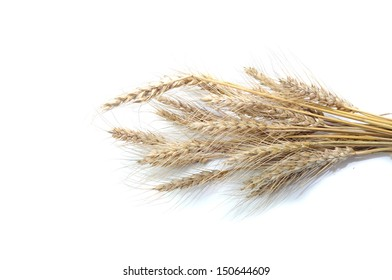 Wheat ears sheaf isolated on white background