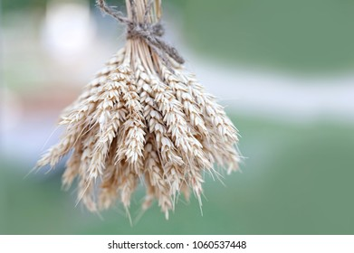 Wheat ears stalks bouquet macro view photo. Green background. Shallow depth of field, selective focus.
