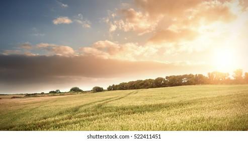 Wheat farm against sky