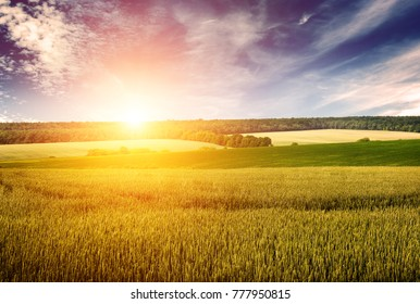 Wheat field, blue sky and dawn in retro style. Free space for text.