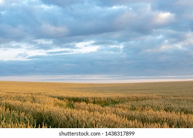 Wheat field with blue sky with sun and clouds against the backdrop
