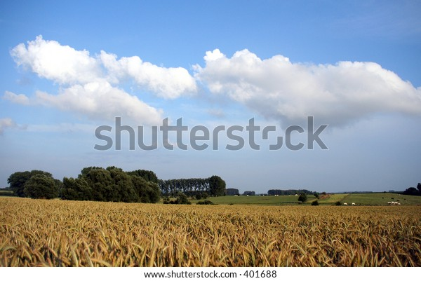 A wheat field and cloudy background
