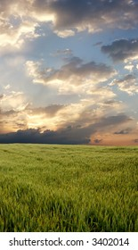 Wheat field during stormy day