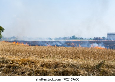 Wheat field in flames Blackened and completely burnt