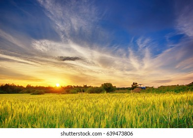Wheat field in the forest  with a blue sky while sunset