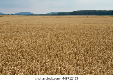 Wheat field in front of mountains
