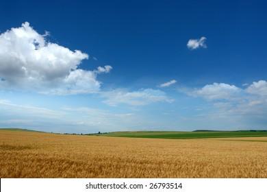 wheat, field, grass, ear, blue, sky, clouds