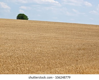 wheat field and green tree