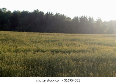 Wheat field with hand