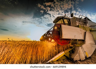 Wheat field at harvesting time