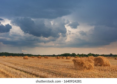 Wheat field with haystacks after harvest