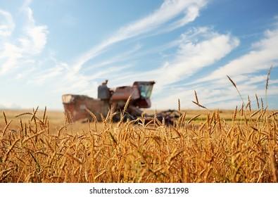 Wheat field. Kombain in a wheat field on a background of blue sky.