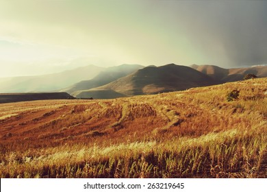 Wheat field in mountains before thunderstorm. Shot in Lesotho.