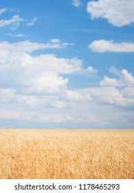 Wheat field. Nature beauty, blue cloudy sky and colorful field with golden wheat.