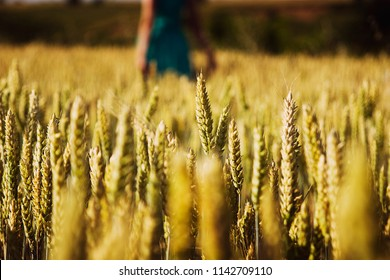 Wheat field on the background of a gentle girl