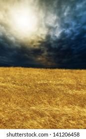wheat field on sunset shallow DOF