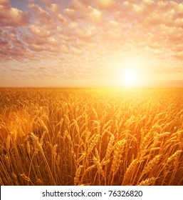 Wheat field over cloudy sky