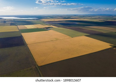 Wheat field ready to harvest, in the Pampas plain, La Pampa, Argentina.