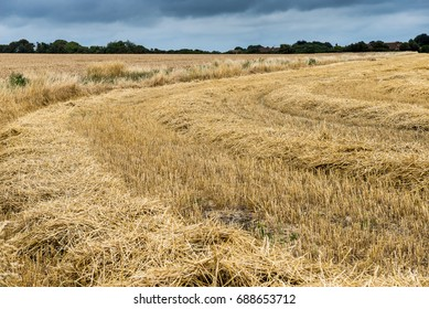 Wheat field recently cropped and awaiting the bailer to produce bails of straw