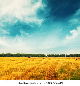 Wheat field with remote tractor and trees on horizon. Landscape in sunny day