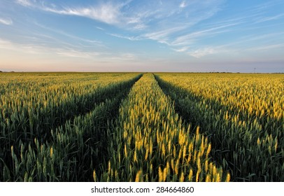 Wheat field with road
