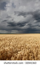 wheat field at storm