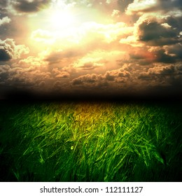 The wheat field and sunset