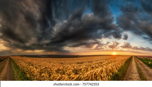 wheat field sunset landscape