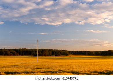 Wheat field with telephone pole during sunset outside Eskilstuna, Sweden