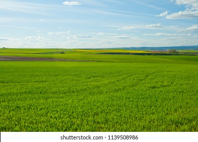 Wheat field under blue sky with clouds, Segovia province, Spain.