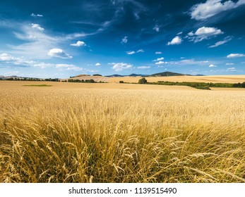 wheat fields in beautiful landscape