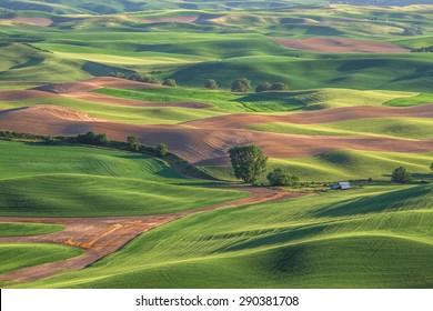 Wheat fields of Palouse in Washington state