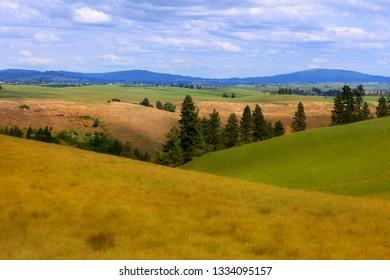 Wheat fields in Palouse,WA