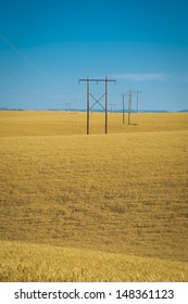 Wheat fields and power lines in eastern Washington state