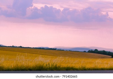 Wheat fields in Provence