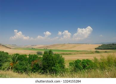 Wheat fields in Viterbo Province Region of Lazio Italy