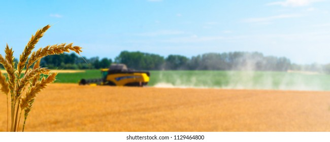 wheat in front of the crop