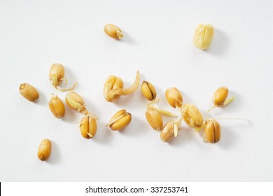 Wheat germs, sprouts, white background