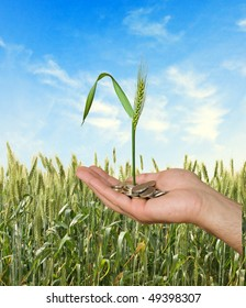 wheat as a gift of agriculture