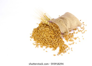 Wheat grain in bag