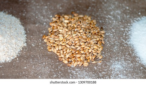 Wheat grain and cereal