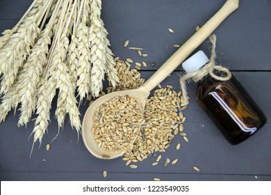 Wheat grain and wheat germ oil