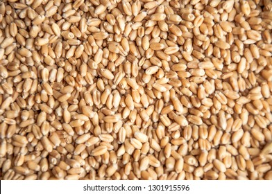 Wheat grain texture and background
