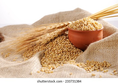 Wheat grains ,Grain of the wheat , whole wheat grains,