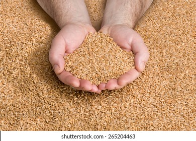 Wheat grains in hands at mill storage with clipping path